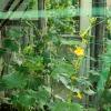Сетка садовая для вьющихся растений, Greenart, 2х5 м